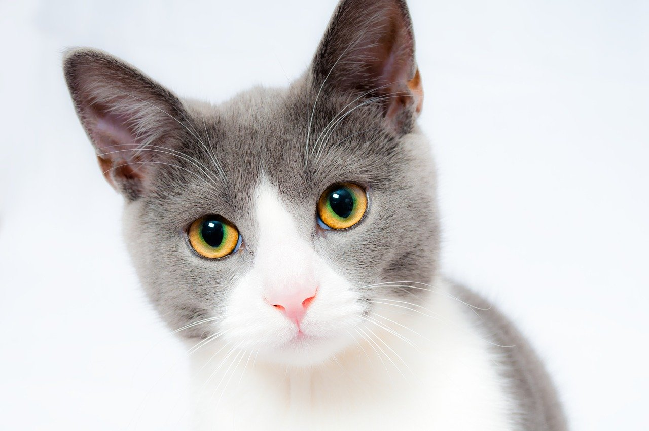 cat, pet, animal